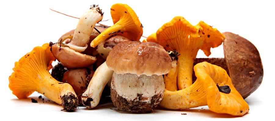 funghi che passione