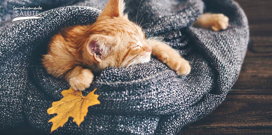 il sonno aiuta a difendersi dalle infezioni